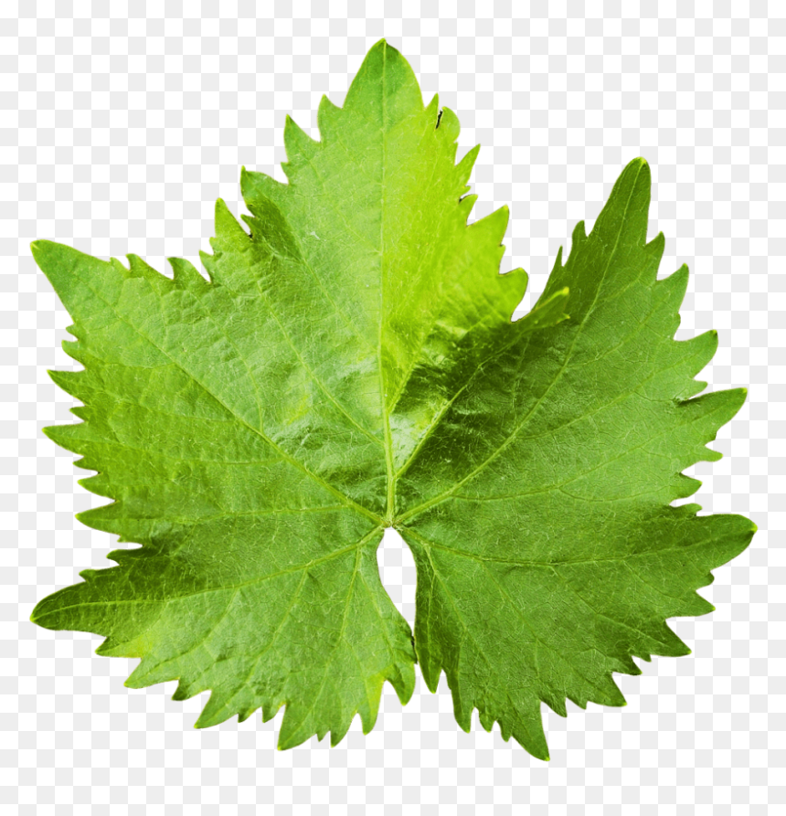 Clip Art Grape Leaves Hd Png Download Vhv