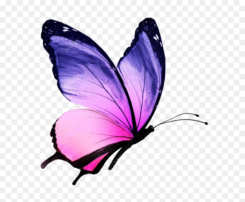 Butterfly Drawing With Colour Hd Png Download Vhv