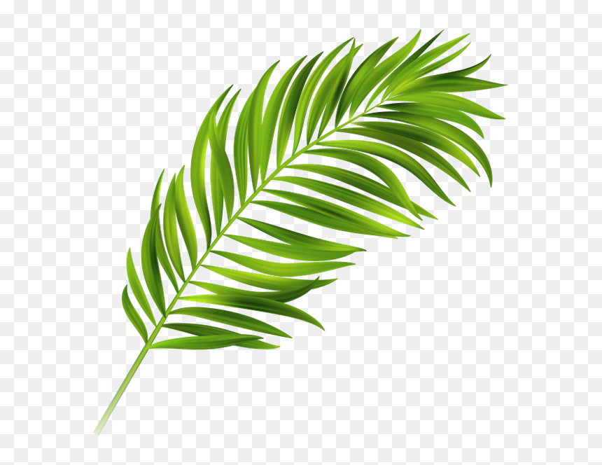 Image Result For Palm Leaves Leave Tropical Vector Free Hd Png Download Vhv Pikpng encourages users to upload free artworks without copyright. leave tropical vector free hd png