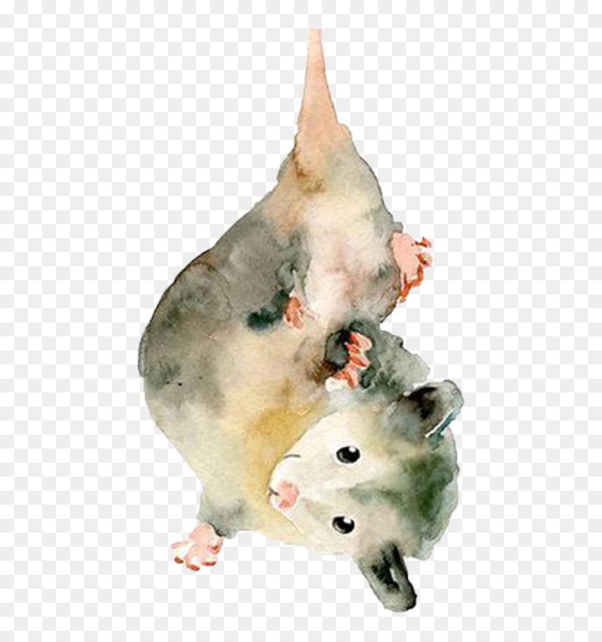Opossum Drawing , Png Download - Cute Possum Drawing Transparent ...