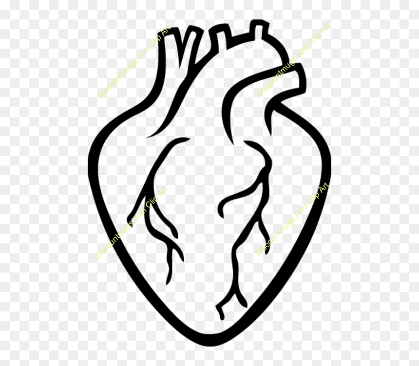 Transparent Realistic Heart Clipart - Real Heart Outline ...