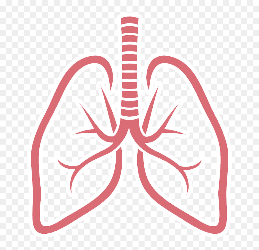 clip art respiratory system lung sacs clipart no background lungs clipart png transparent png vhv clip art respiratory system lung sacs