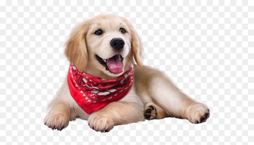 Golden Retriever Puppy Hd Png Download Vhv
