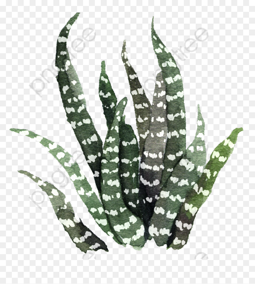 Succulents And Cactus Aesthetic Hd Png Download Vhv Tons of awesome aesthetic cactus profile pic wallpapers to download for free. cactus aesthetic hd png download