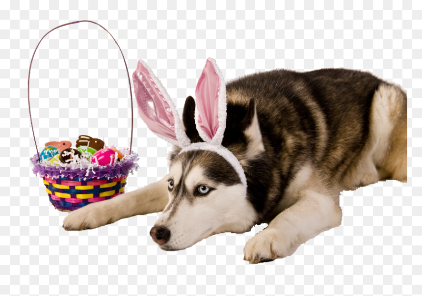 Transpa Dog With Bunny Ears Hd Png