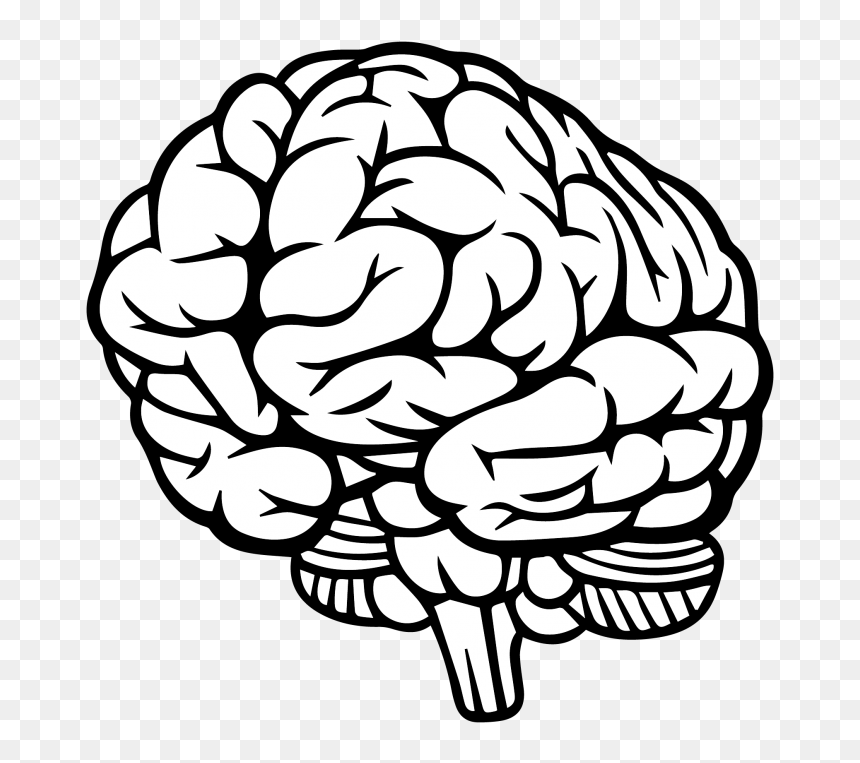 transparent brain clipart png brain drawing 3 4 png download vhv transparent brain clipart png brain