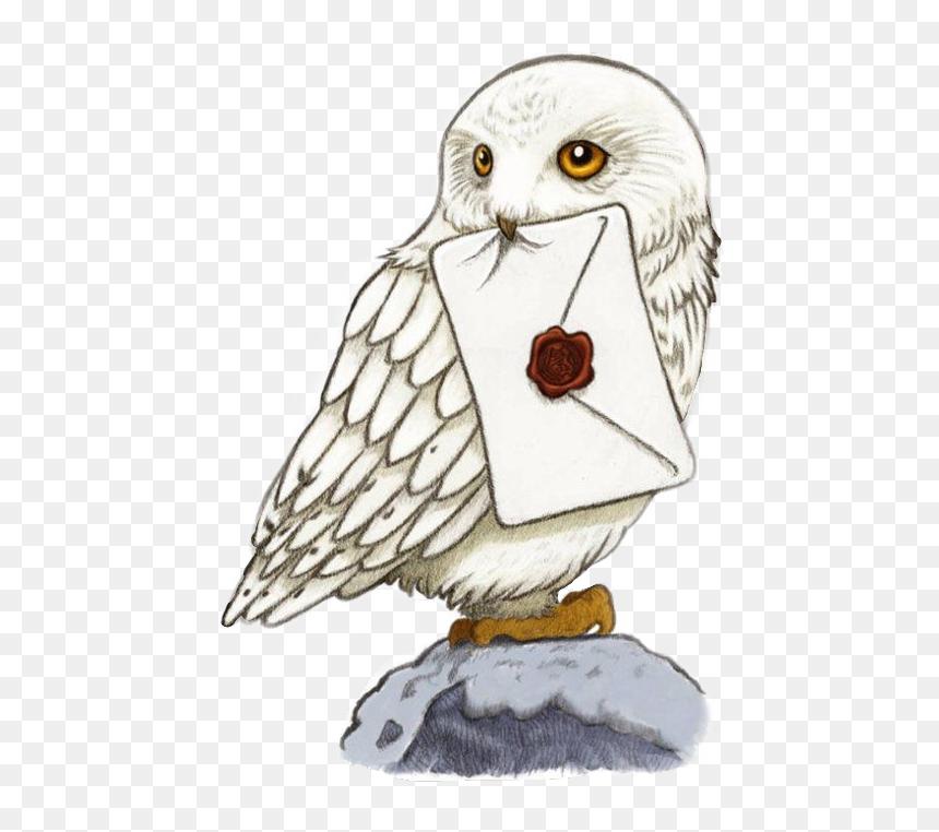 Harry Potter Owl Drawing Transparent Cartoons Harry Potter Hedwig Sticker Hd Png Download Vhv