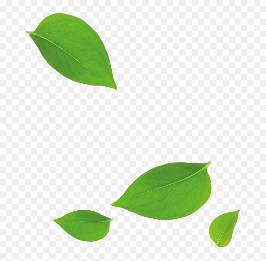 Green Leaves Falling Down Transparent Cartoons Green Leaf Falling Down Hd Png Download Vhv