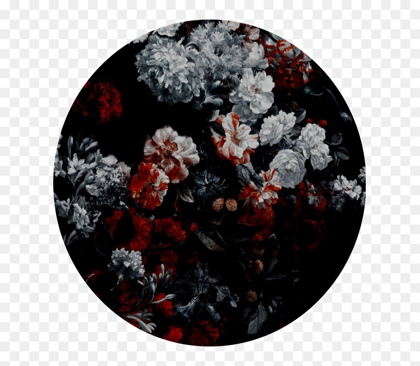 147 1474173 flowers black red white background rose aesthetic red