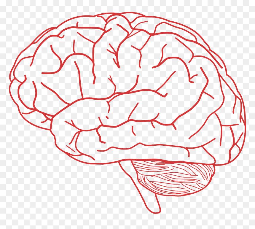 Transparent Background Brain Transparent Hd Png Download Vhv