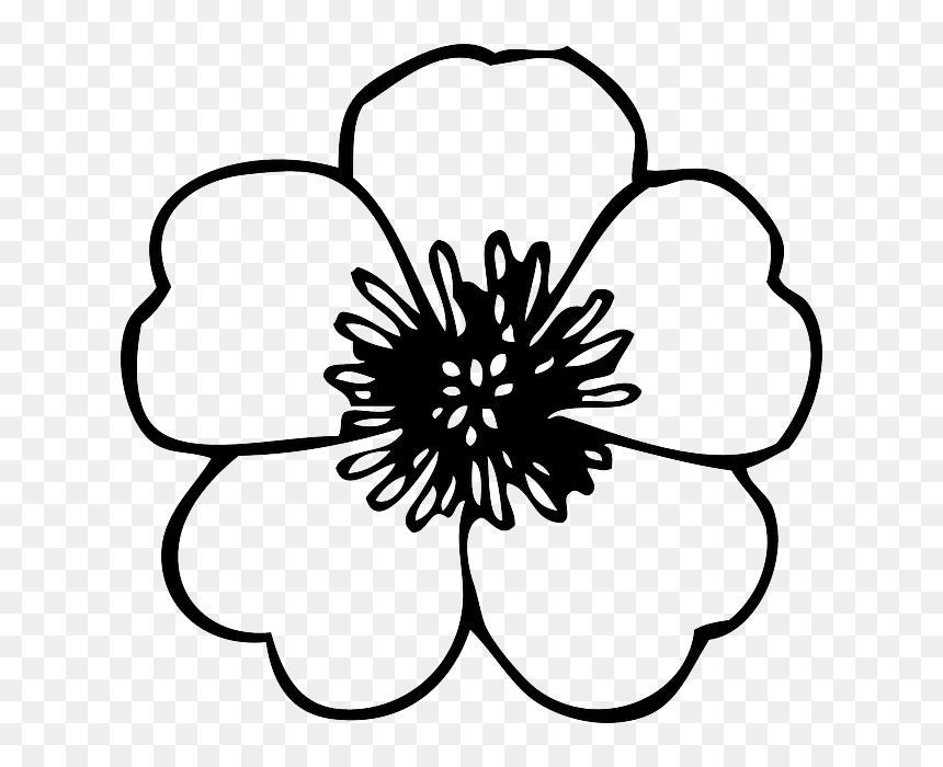 Black Green Large Simple Line Drawing Of Flower Hd Png Download Vhv