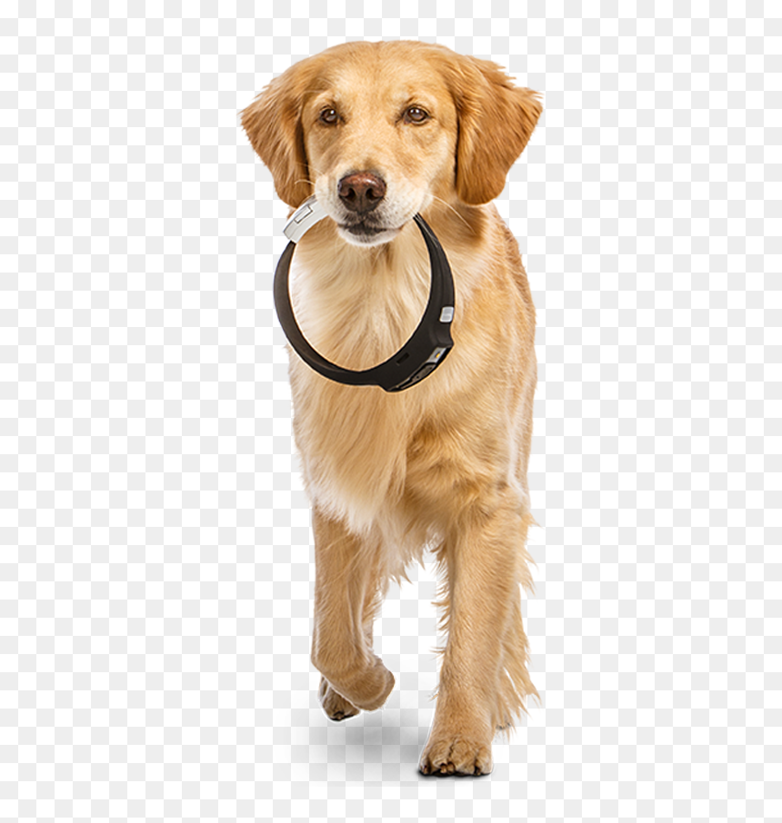 Iot Based Wearable Device For Pets Hd Png Download Vhv