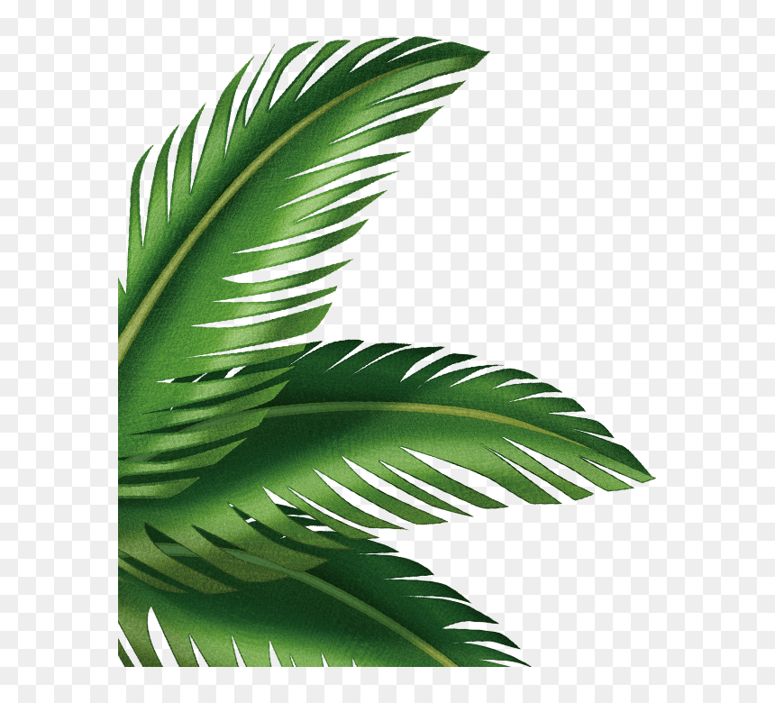 Palm Leaves Transparent Background Hd Png Download Vhv Large collections of hd transparent tropical leaves png images for free download. palm leaves transparent background hd