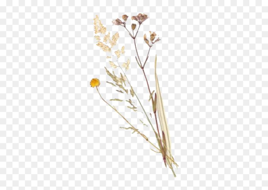 Polyvore Filler Png Plants Flower Freetoedit Aesthetic Art Hoe Flower Transparent Png Vhv