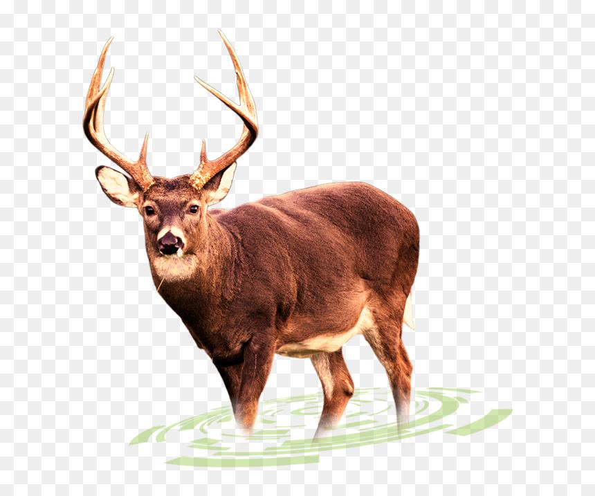 Deer images clipart Deer clipart free download creazilla |  Edmund.holliefindlaymusic.com