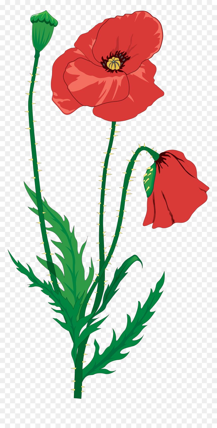 Poppy Remembrance Day Clip Art | Remembrance day art, Poppy drawing, Remembrance  day poppy