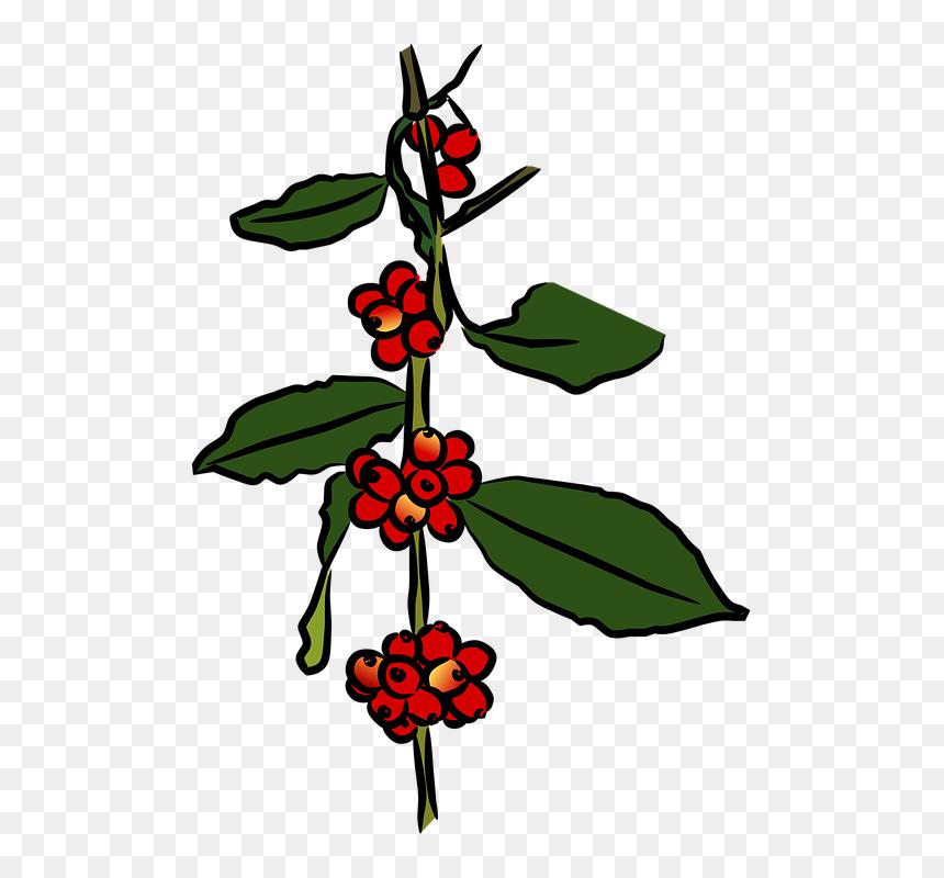 coffee plant png clipart png download gambar karikatur pohon kopi transparent png vhv coffee plant png clipart png download