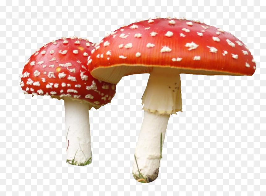 transparent fungi clipart transparent background mushroom png png download vhv transparent fungi clipart transparent