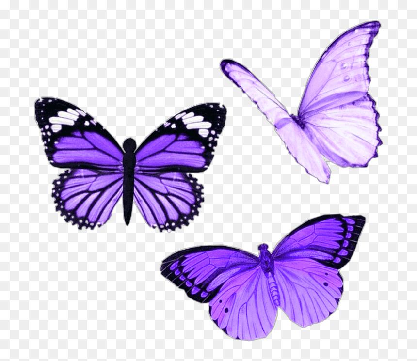 #png #purple #butterfly #aesthetic #moodboard #niche ...