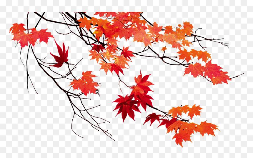 Autumn Leaf Color Maple Leaf Autumn Leaves Transparent Background Hd Png Download Vhv