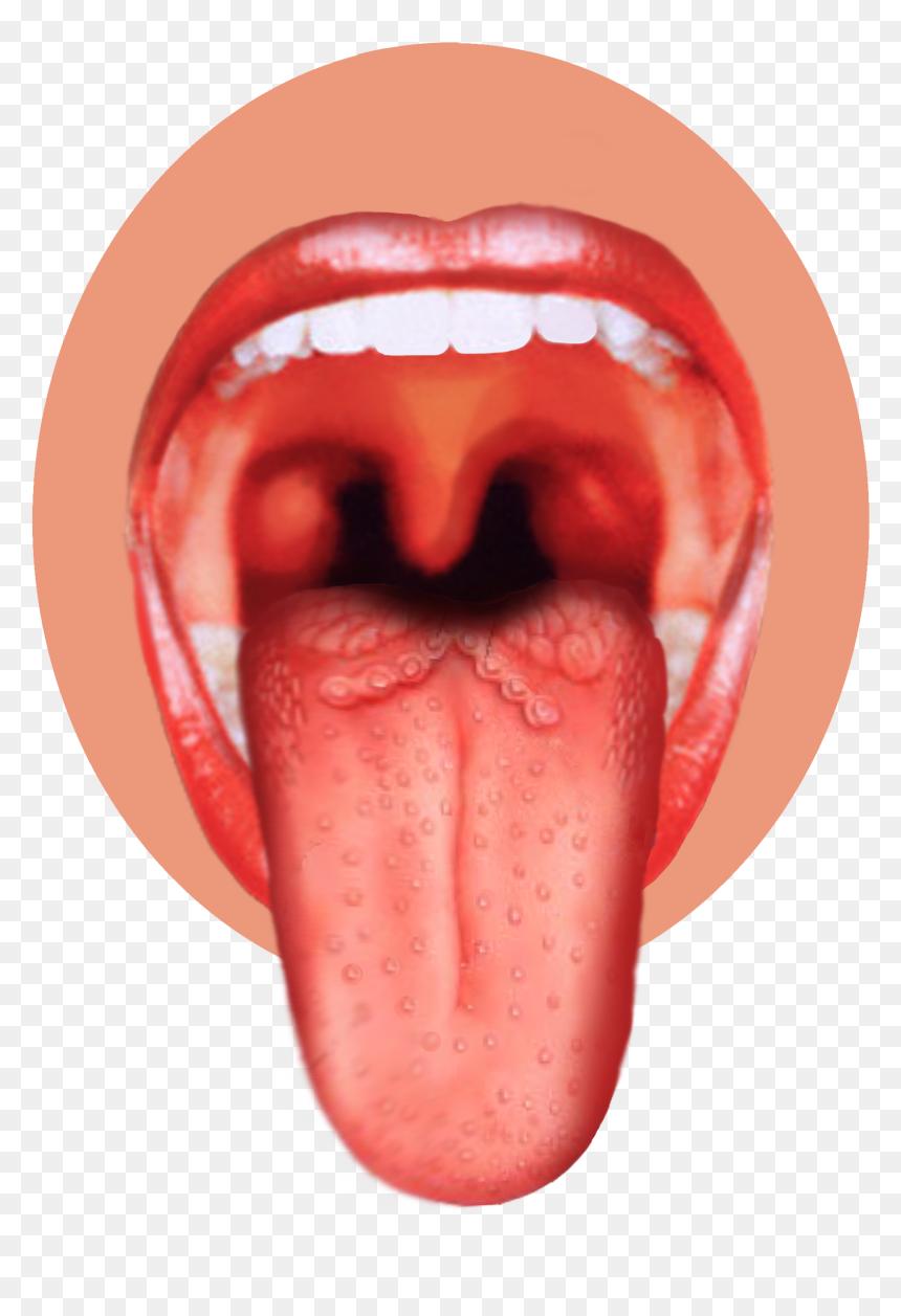 On taste tongue buds The Taste