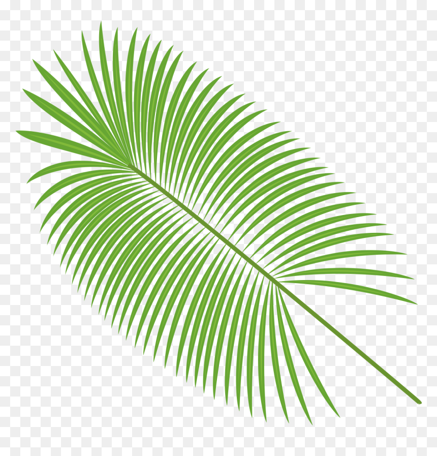Palm Leaves Vector Material Png Download Palm Leaf Transparent Background Png Download Vhv Download the silhouette in eps, jpg, pdf, png, and svg formats. palm leaves vector material png