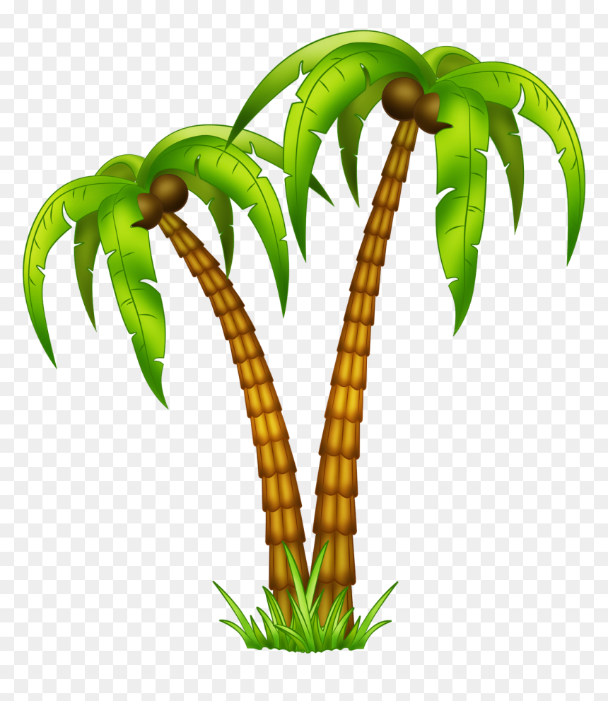 Transparent Palm Tree Leaves Png Tropical Tree Drawing Png Download Vhv