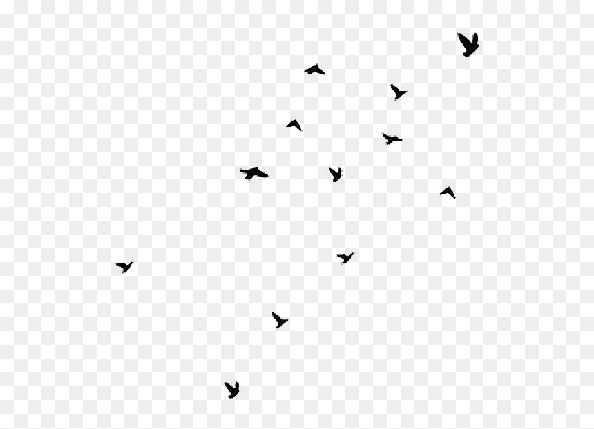 Aesthetic Clipart Bird Svg Library Stock Birds Black Flying Birds Gif Transparent Hd Png Download Vhv