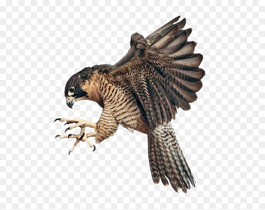 Falcon Png Image Background Peregrine Falcons Grabbing A Bird Transparent Png Vhv