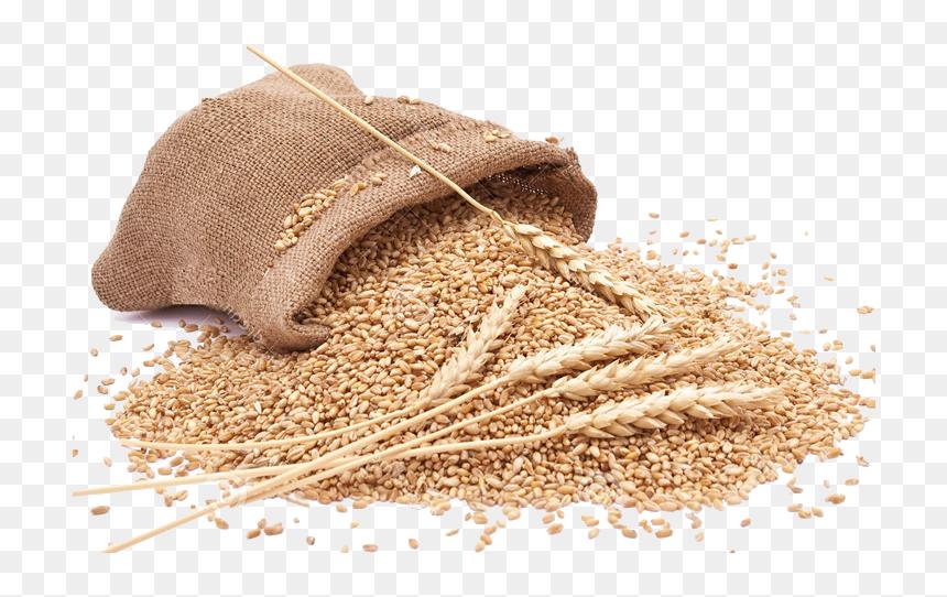 grain png clipart whole wheat flour png transparent png vhv grain png clipart whole wheat flour