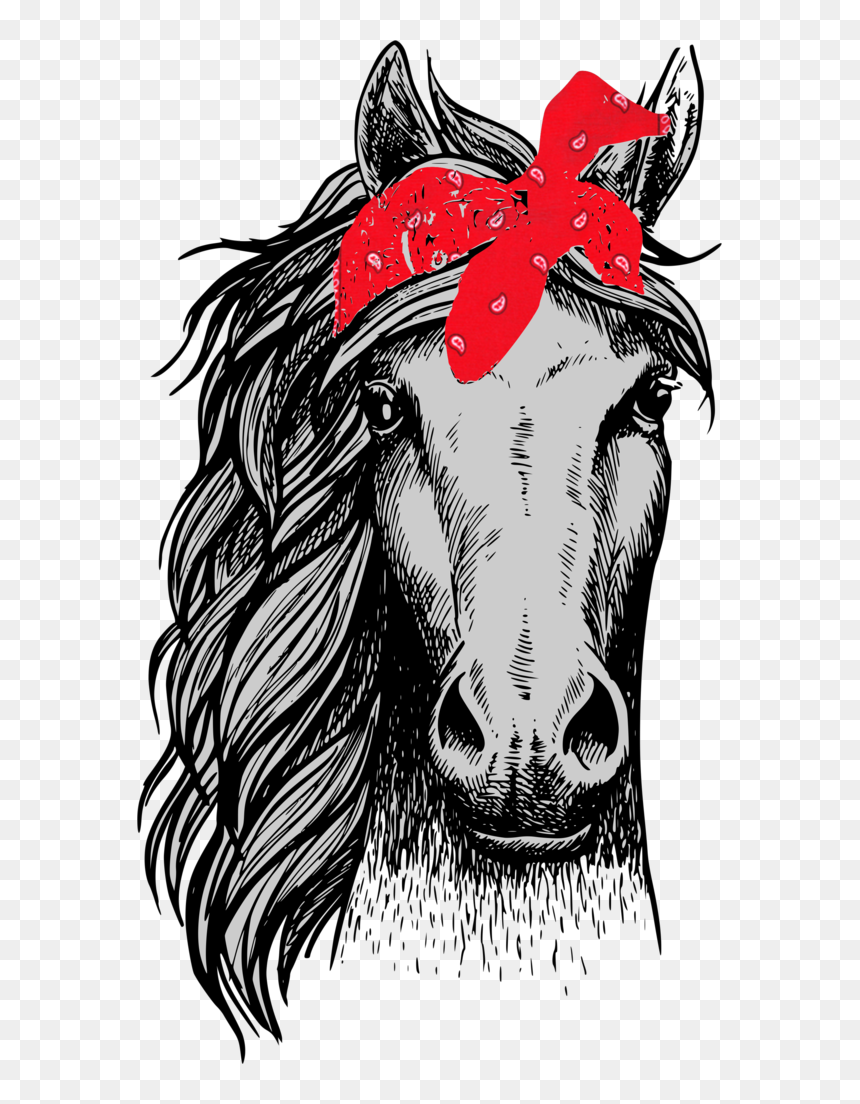 Horse Front View Drawing Png Download Horse Face Front View Transparent Png Vhv