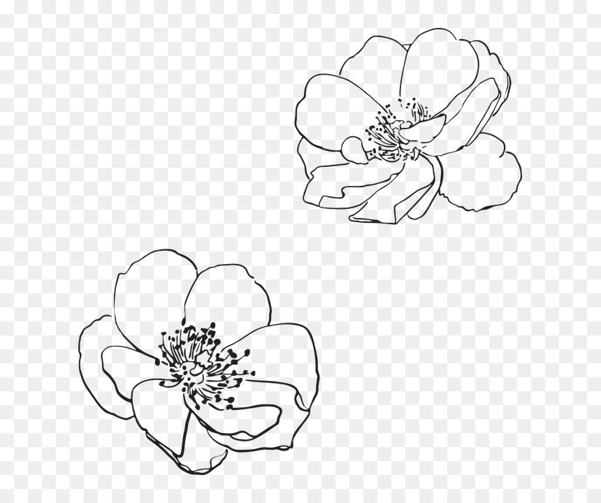 Free Image On Pixabay Flower Line Drawing Png Transparent Png Vhv