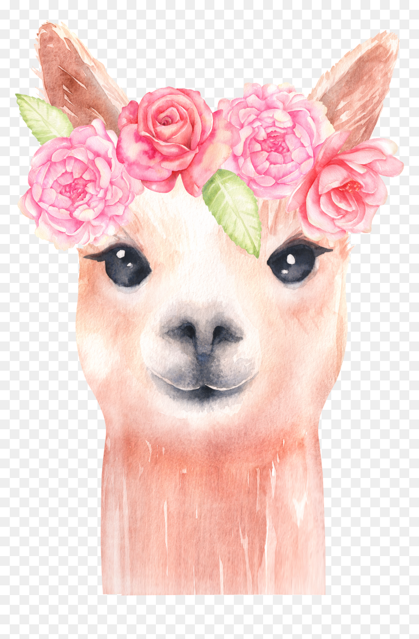 Llama Clipart (Graphic) by magreenhouse · Creative Fabrica