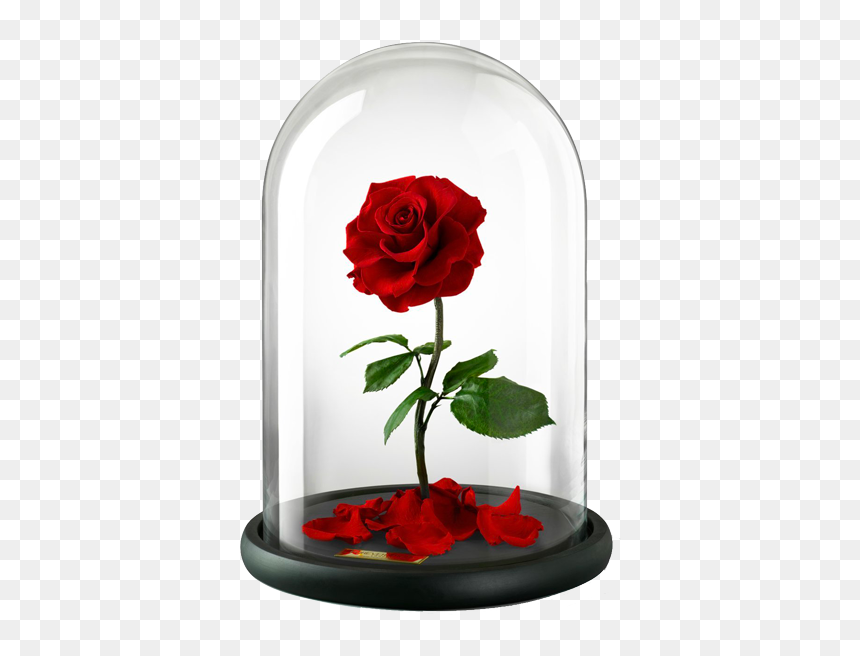 Belle Beast Rose United Kingdom Flower Beauty And The Beast Rose Transparent Hd Png Download Vhv