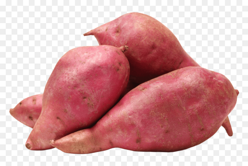 Transparent Yams Png Sweet Potato Images Hd Png Download Vhv When designing a new logo you can be inspired by the visual logos found here. sweet potato images hd png download