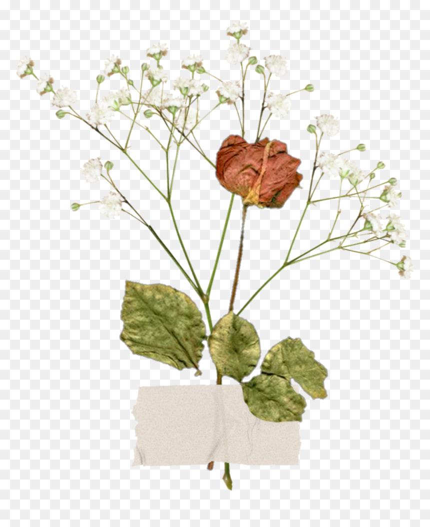 Freetoedit Aesthetic Vintage Flower Aestheticflower Aesthetic Vintage Flower Png Transparent Png Vhv