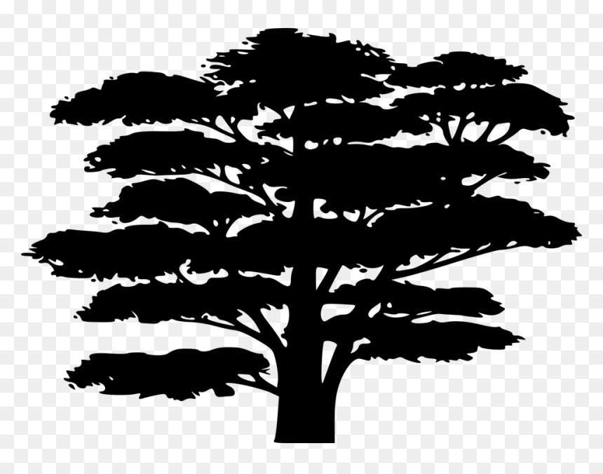 Jungle Tree Clip Art Black And White Png Download Cartoon Tree Silhouette Transparent Png Vhv All our images are transparent and free for personal use. jungle tree clip art black and white