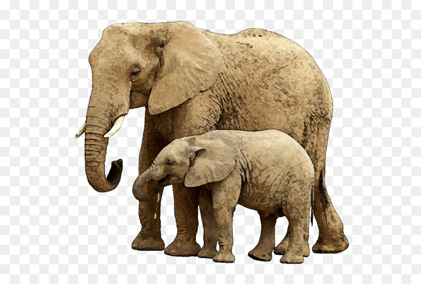 Baby Elephant Png Image With Transparent Background Transparent Background Elephant Png Png Download Vhv In the large elephant png gallery, all of the files can be used for commercial purpose. baby elephant png image with