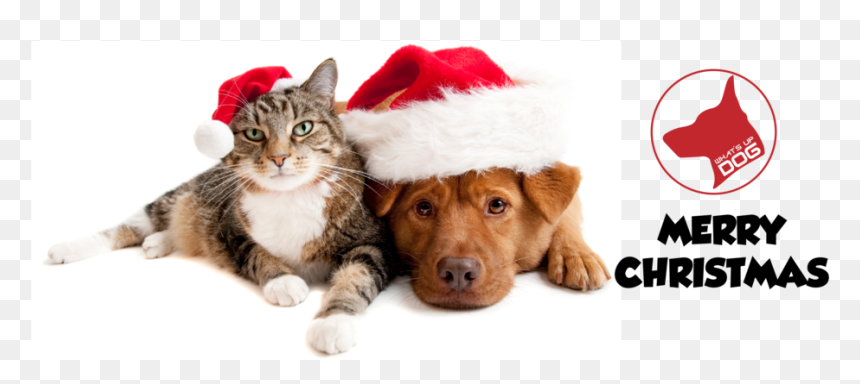 Dog Cat Christmas Cartoon Christmas Dog And Cat Hd Png Download Vhv
