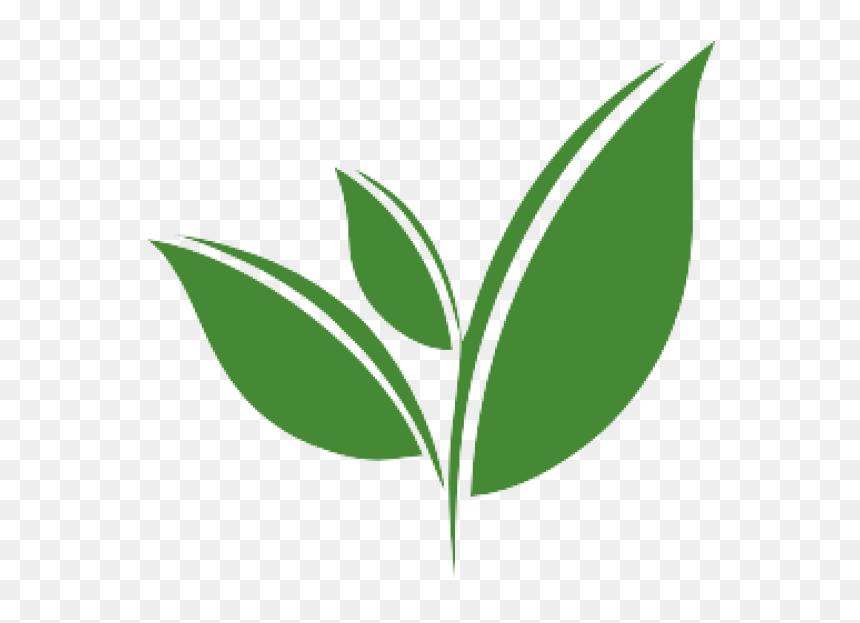 Tea Leaf Vector Png Clipart Png Download Green Tea Leaf Vector Transparent Png Vhv