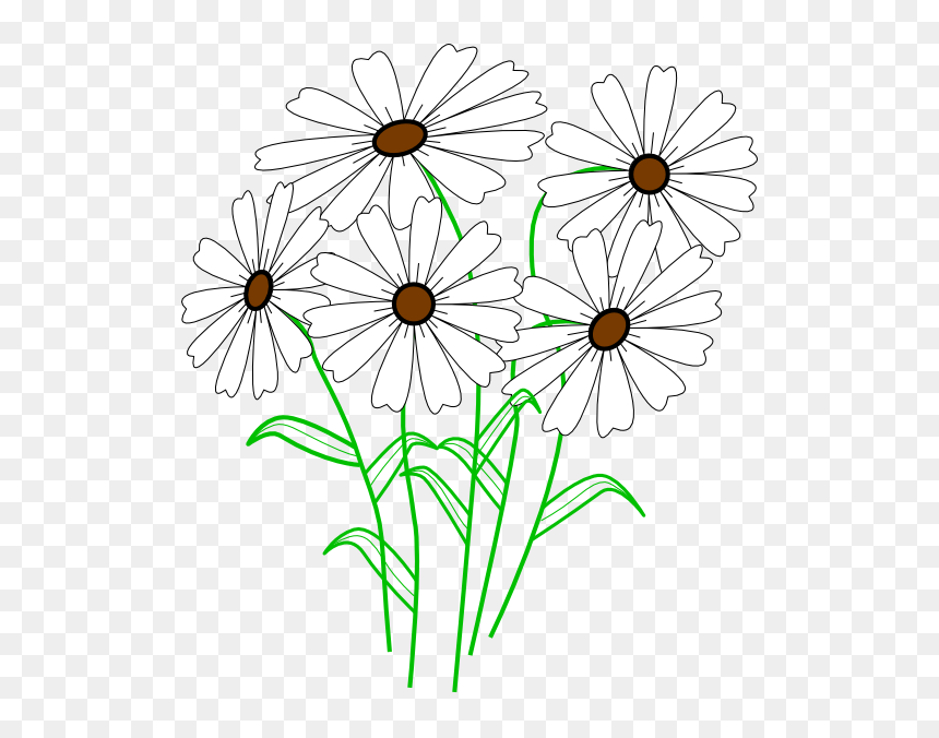 Daisy Clip Art Outline, HD Png Download - 4948x4901(#4446) - PngFind