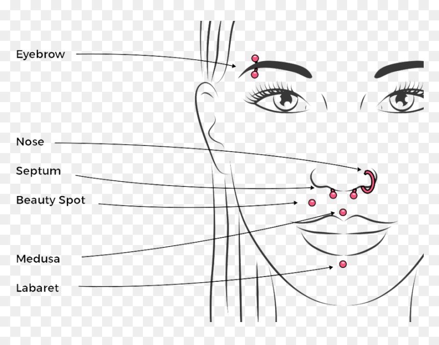 Facial Piercing Chart Septum Medusa Smiley Piercing Hd Png Download Vhv