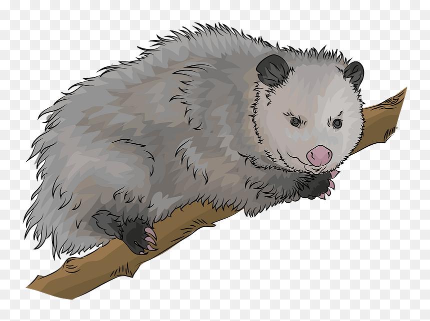 Opossum Mammal Silhouette Svg - Opossum Silhouette Clipart (#1659569) -  PinClipart