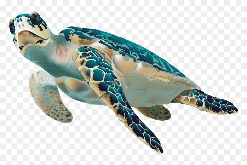 Transparent Sad Cartoon Png Sea Turtle Transparent Background