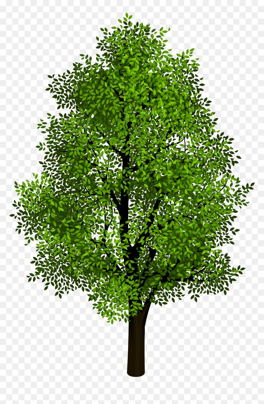 Trees With Clear Background Hd Png Download Vhv Find images of cartoon tree. clear background hd png download