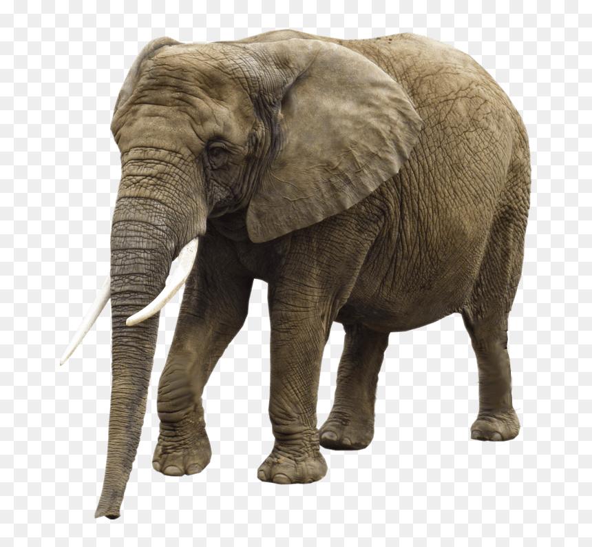 Elephant Png Image Transparent Background Elephant Png Png Download Vhv Elephants png images free download, elephant. vhv rs