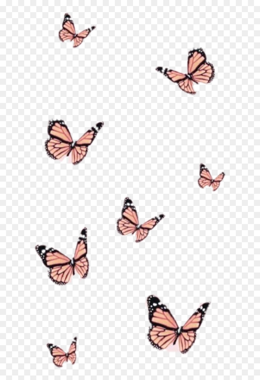 Aesthetic Wallpapers Butterfly Hd Png Download Vhv