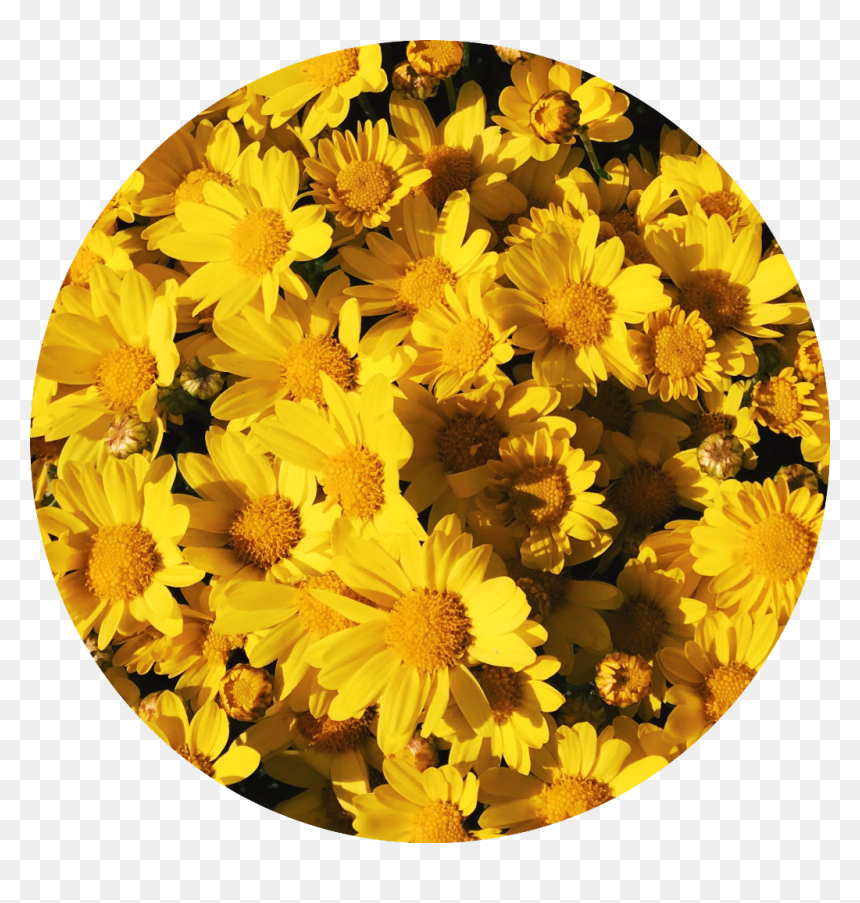 yellow flower background tumblr link wallpapers aesthetic background flowers hd png download vhv yellow flower background tumblr link