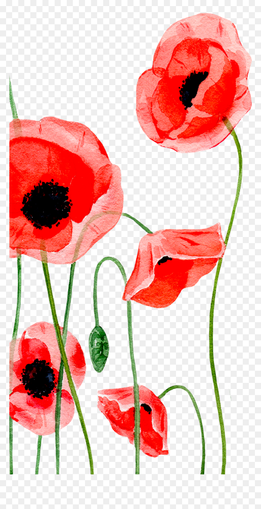 Transparent Remembrance Day Clipart Iphone Wallpaper Poppy Flower Hd Png Download Vhv