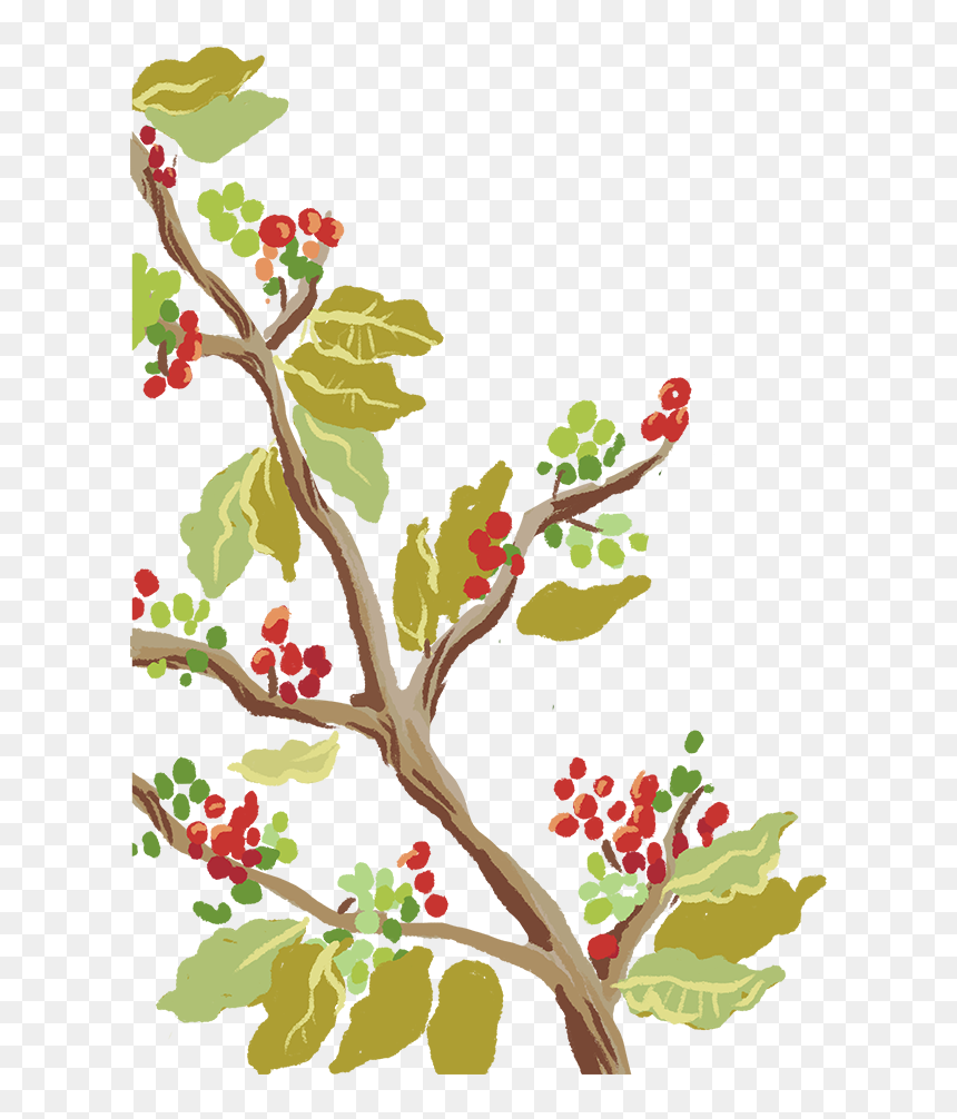 transparent coffee cartoon png coffee tree coffee plant cartoon png download vhv coffee tree coffee plant cartoon png